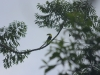 Tucan, entdeckt beim Morning Hike im Essence Arenal