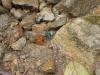 Türkis-Grüner Käfer auf dem Weg zum Cerro Chato