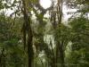 Der Kratersee des Cerro Chato hinter Bäumen