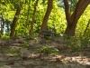 Ein Leguan am Playa Ocotal