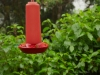 Kolibri an der Futterstation