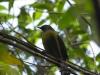 Irgendein gelb-schwarzer Vogel