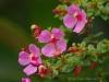 Blüten am Poás
