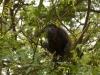 Wieder mal Affen, bei Sámara