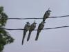 Vögel in Montezuma