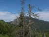 Am Weg zur Buchsteinhütte
