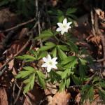 Frühling in Lalling