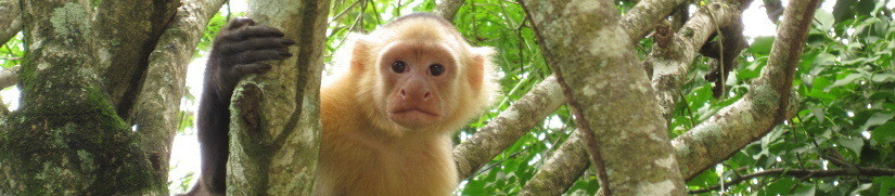 Costa Rica: Montezuma