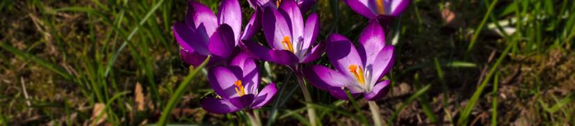 Frühling in Regensburg